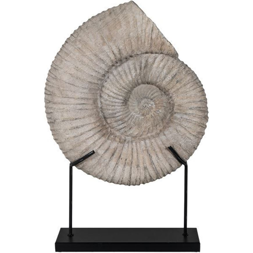 FOSSIL shell decoration h63cm grey