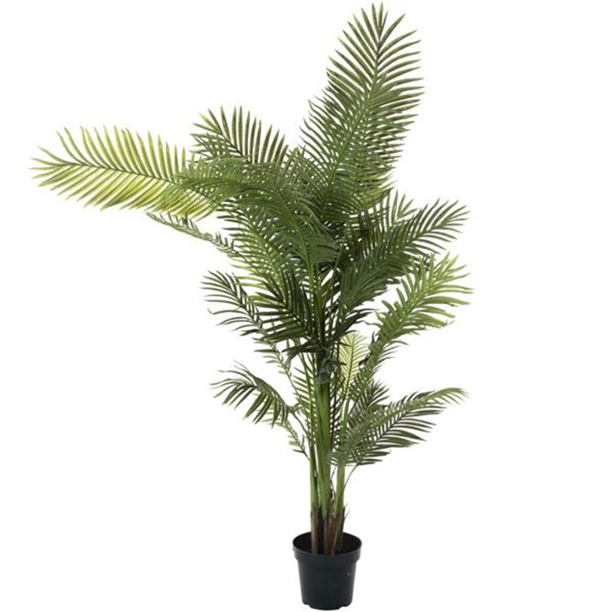 Picture of ARECA PALM tree h210cm green