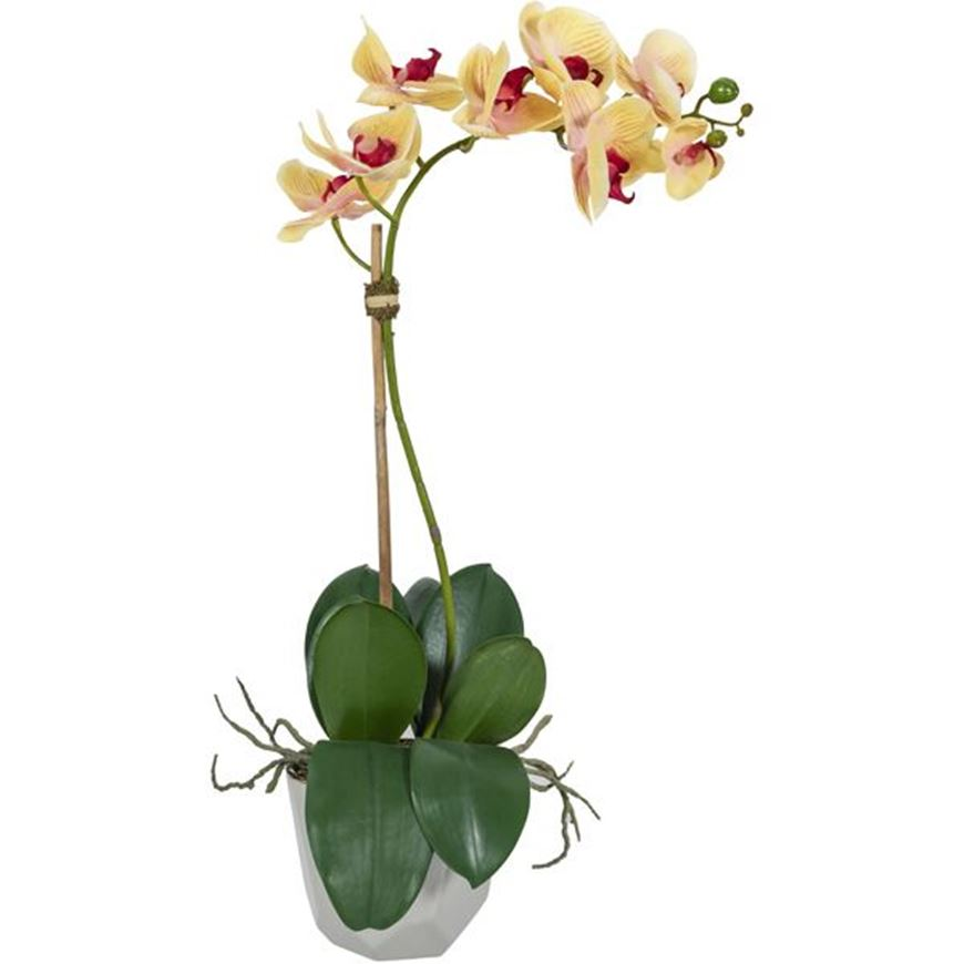 Picture of ORCHID pot h60cm yellow/cream