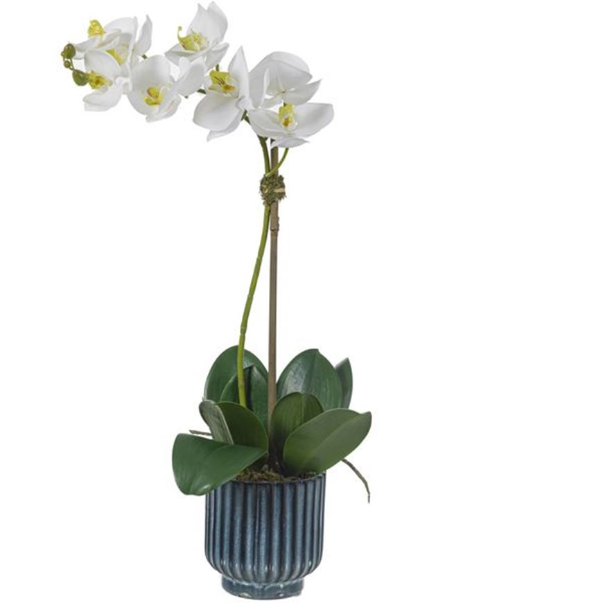 Picture of ORCHID pot h60cm white/assorted