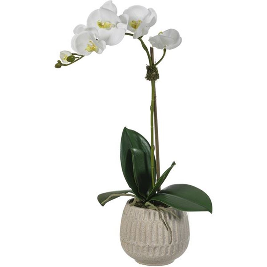 Picture of ORCHID pot h55cm white/white