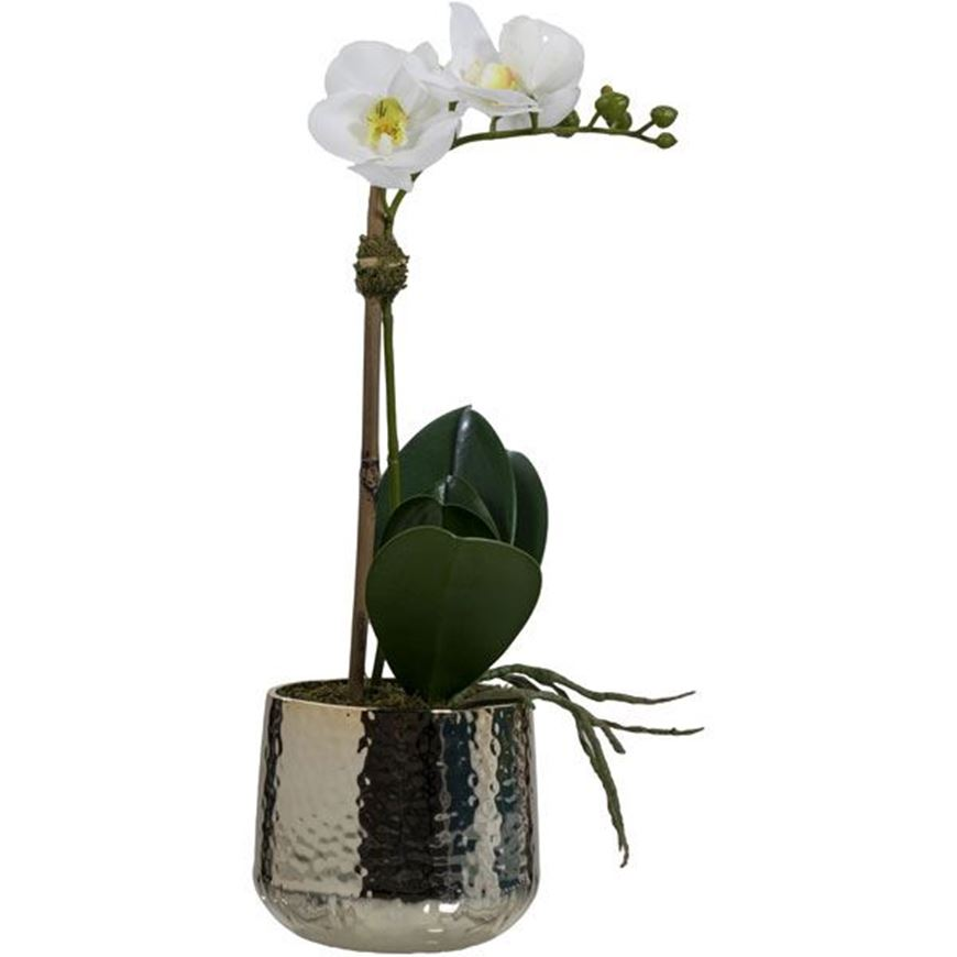 Picture of PHALAENOPSIS pot h46cm white/gold