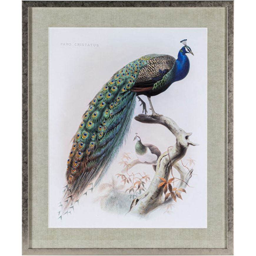 Picture of PEACOCK print 63x75 gold
